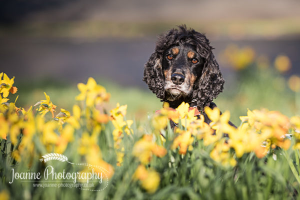 Dog with daffodil