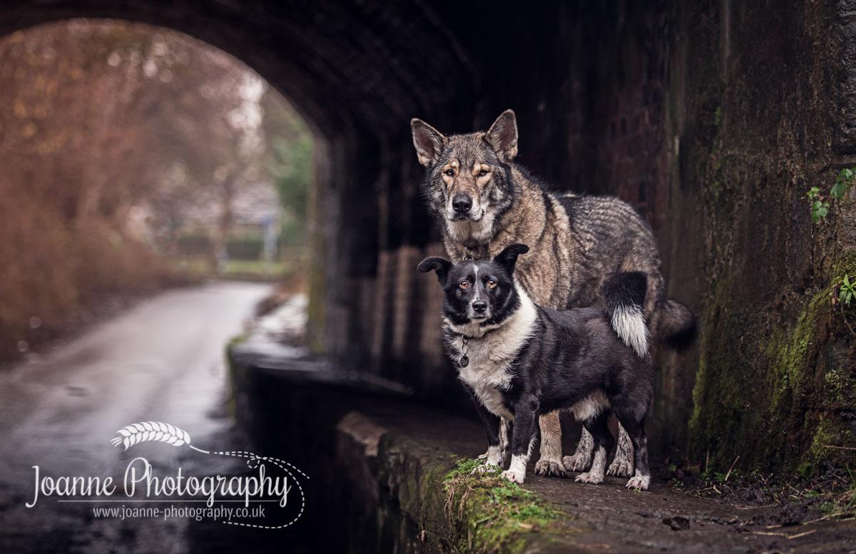 Dogs Portrait Manchester