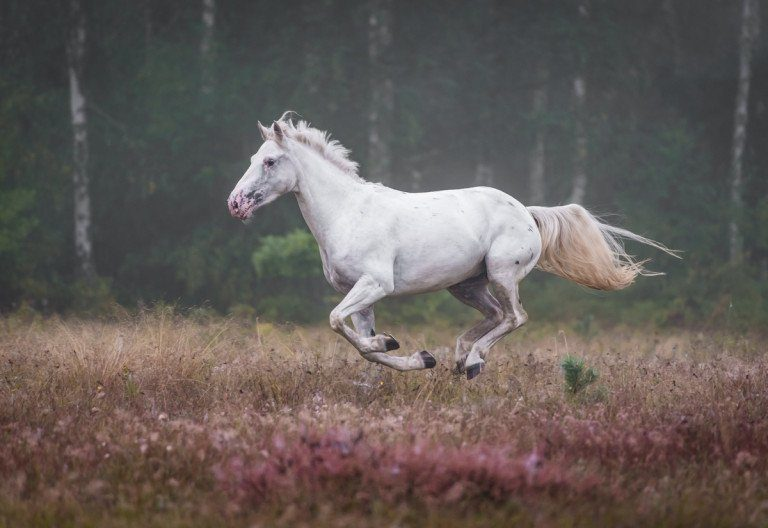 Horse At Liberty Photography