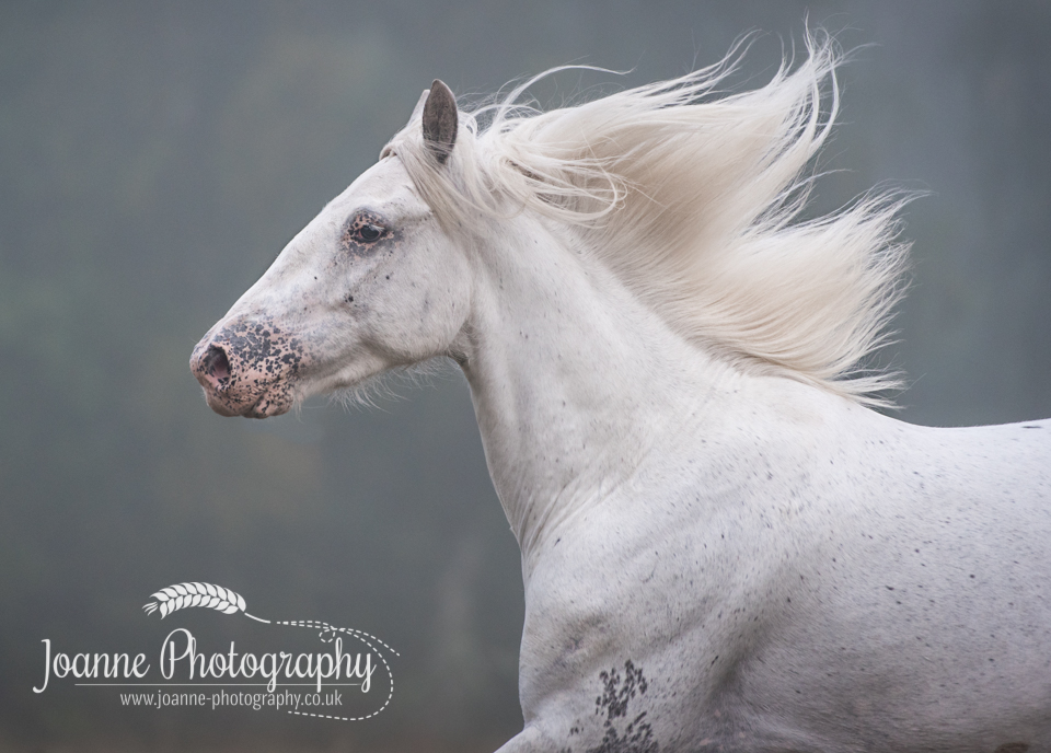 Horse Photography Session