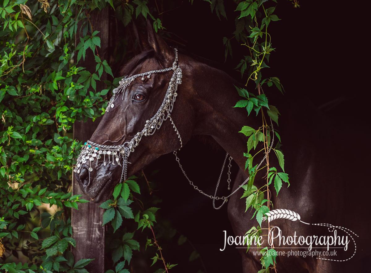 Horse portrait taken in Poland.