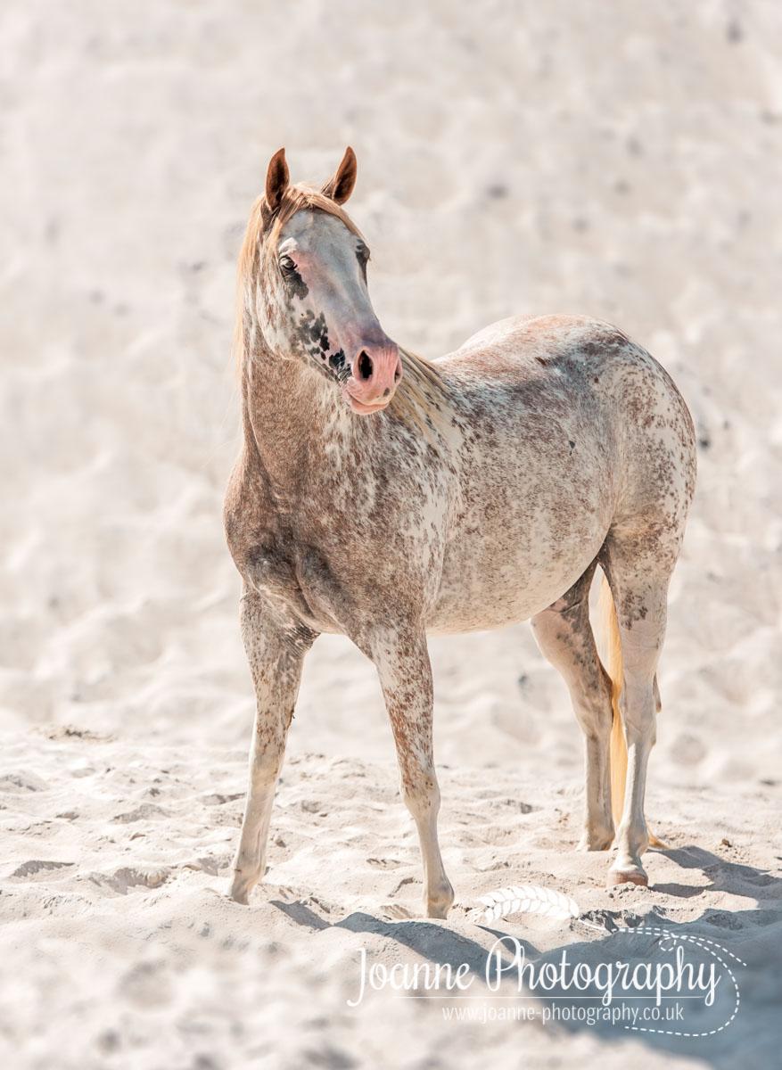 Horse Portrait and White Sand