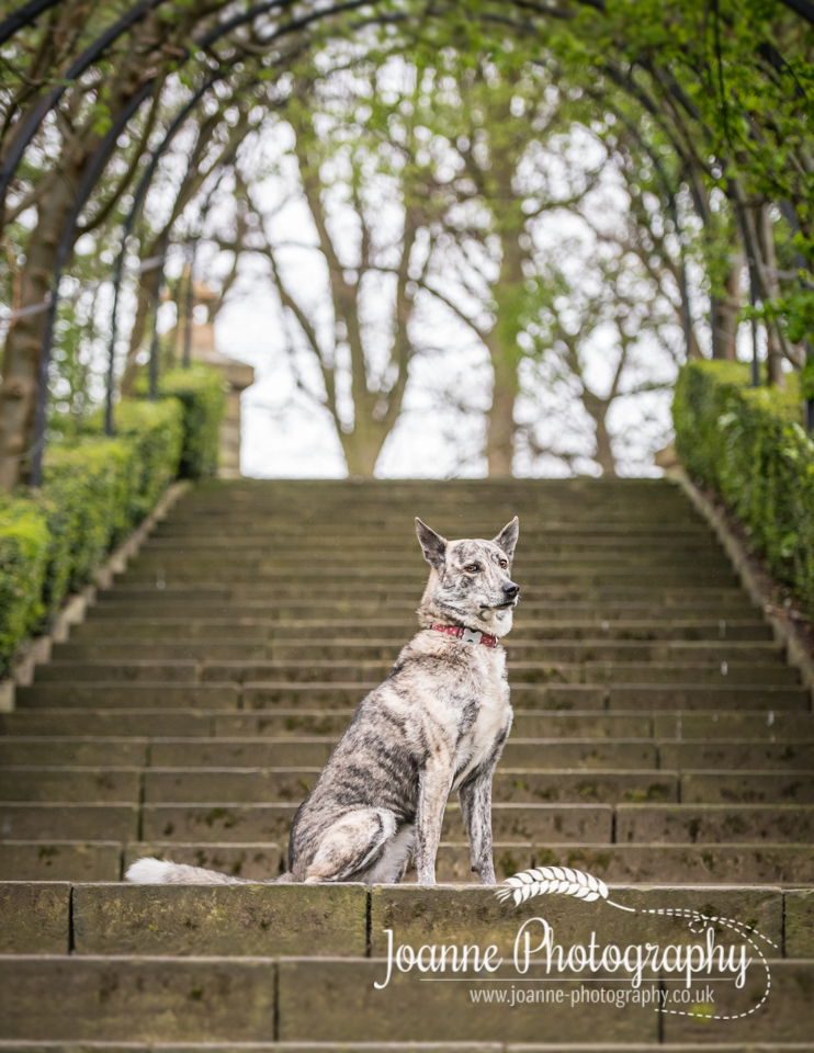 dog in staircase photography