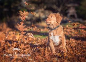 dog playing autumn photoshoot
