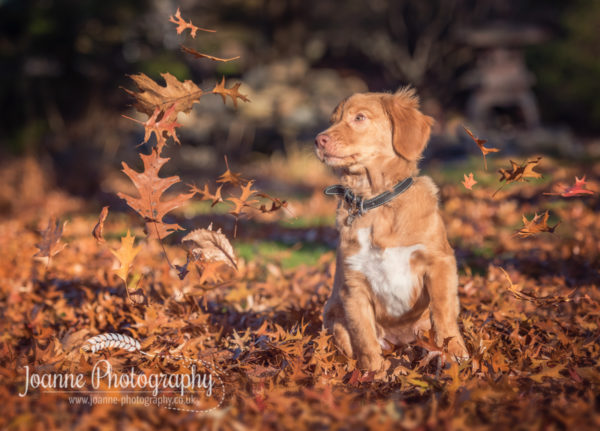 dog playing autumn photoshoot