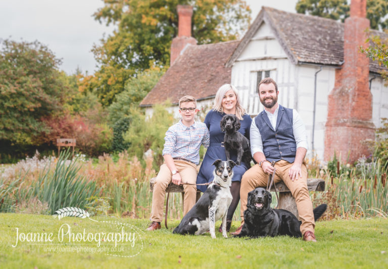 family and dogs-photography