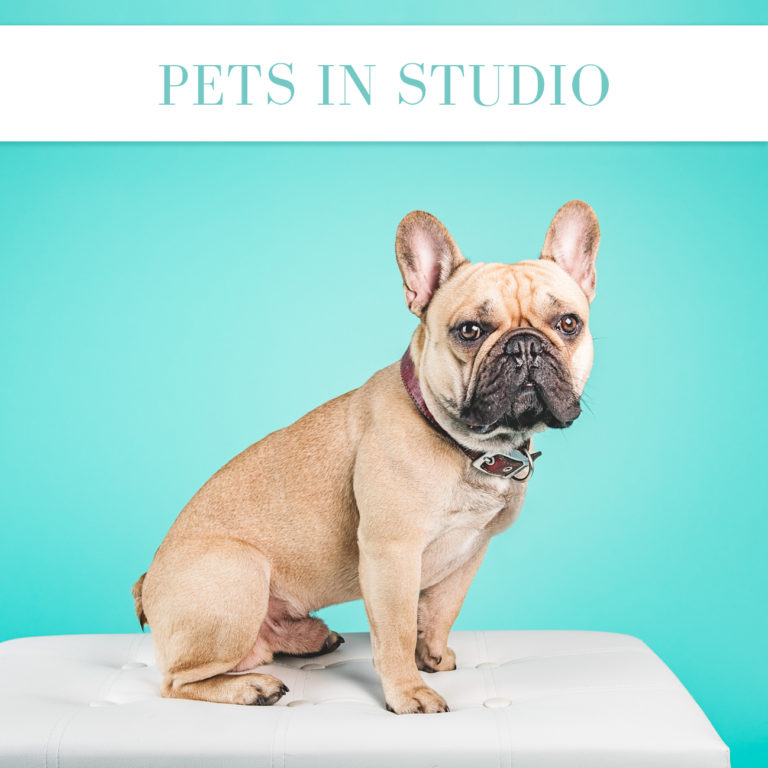 pet in studio cheshire