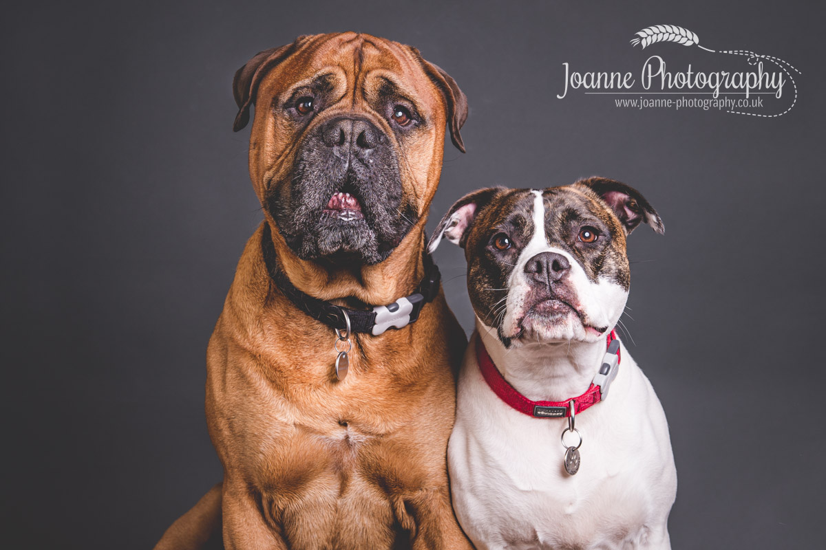 Two big beautiful pooches!!