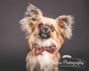 Joanne Photography dog photographer cheshire
