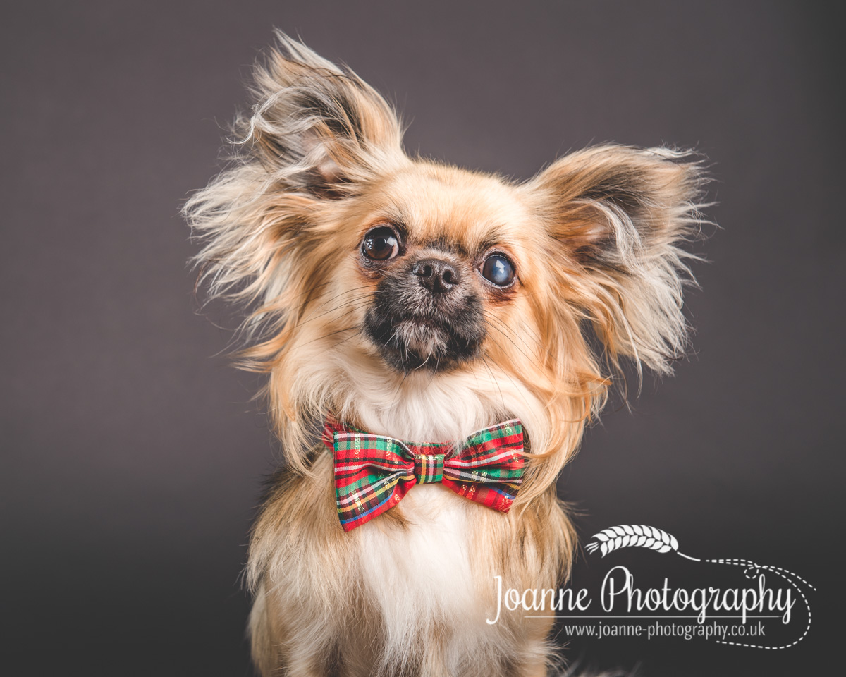 Joanne Photography dog photographer cheshire