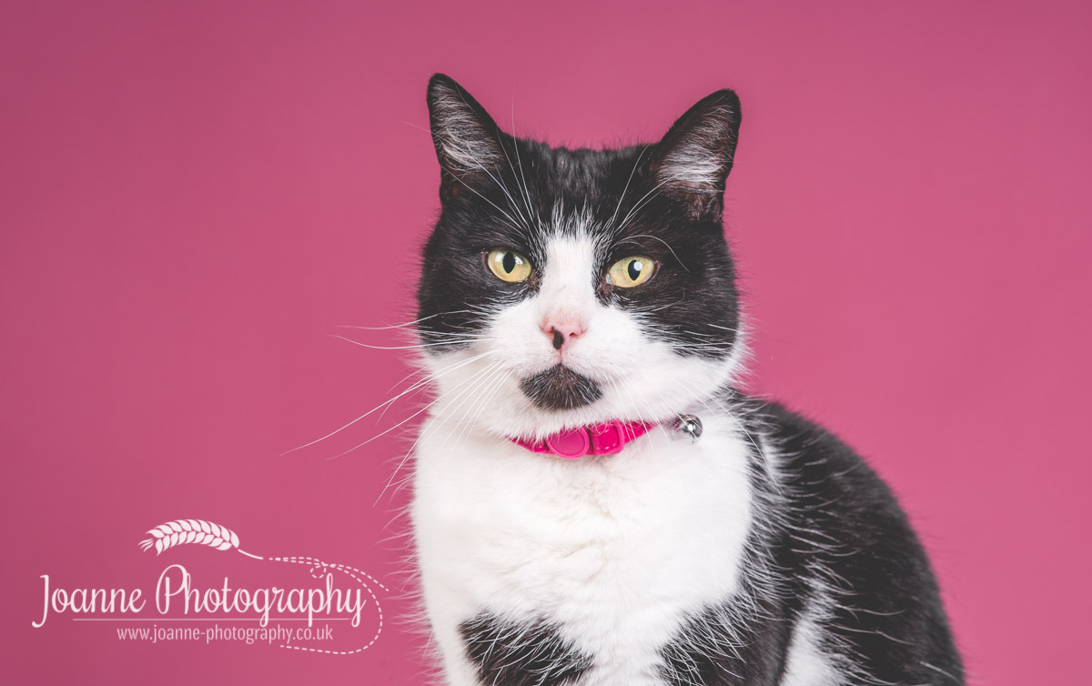 black-and-white-cat-Stockport