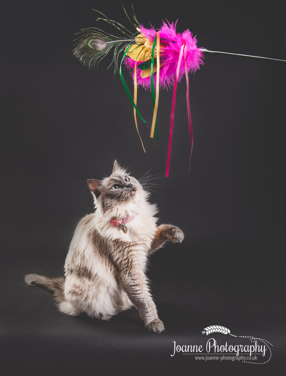cat-action-photography