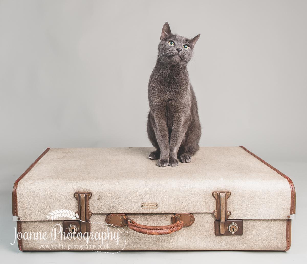 cat photographer cheshire