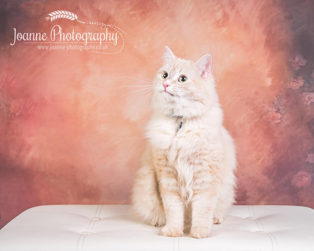 cat-photography-cheshire