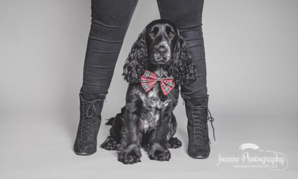 cocker-spaniel-and-owner