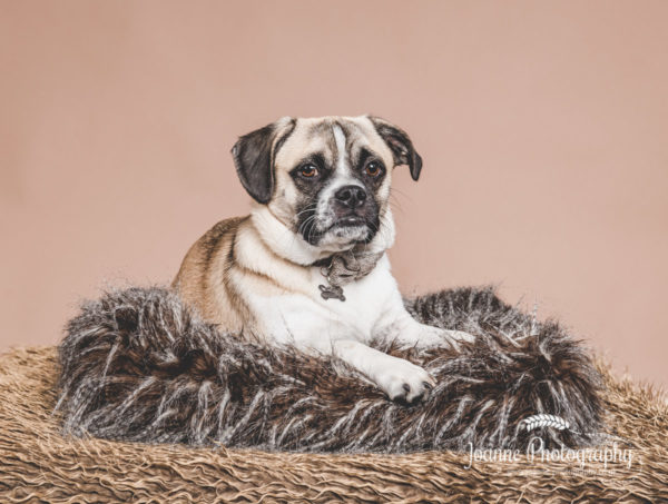 dog-lying-down-photographer-stockport