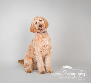 dog photographer greater manchester