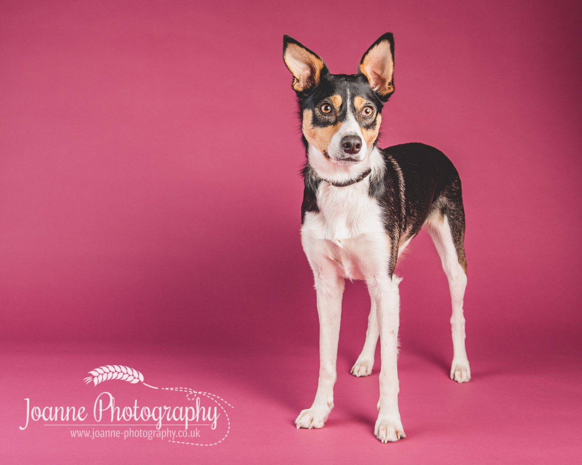 dog photographer stockport
