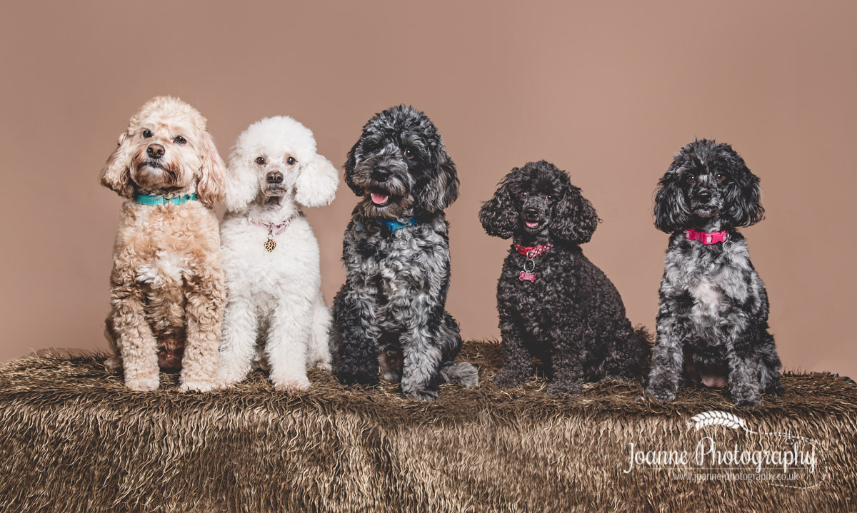five-small-dogs-photography