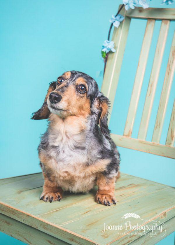 lovely-sausage-dog