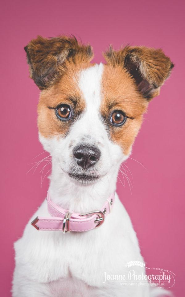 mixed-breed-dog