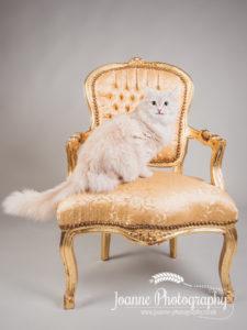 posh cat photography