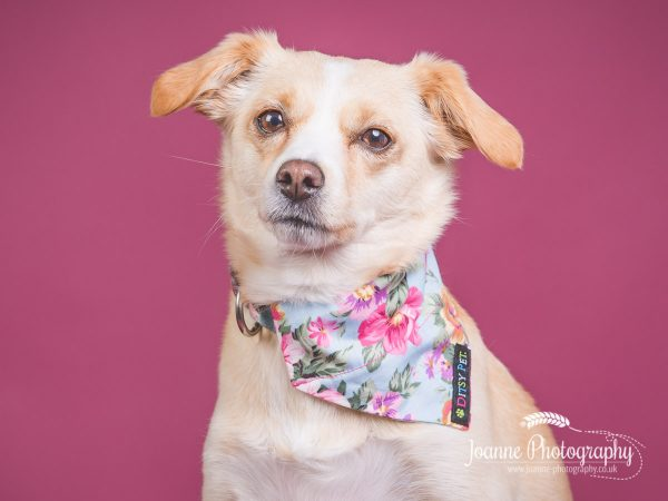 rescue-dog-studio-photography
