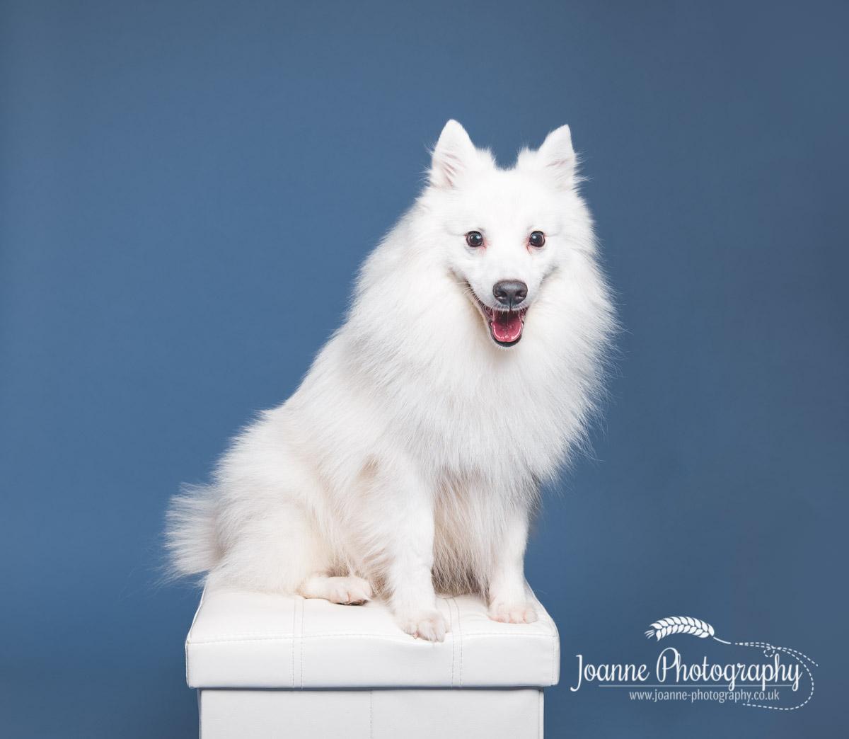 white-dog-pet-photographer