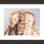 frame-cat