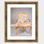 gold-frame-cat