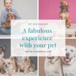 Fabulous Experience
