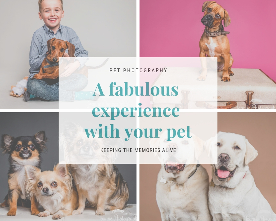 A Fabulous Experience with your pet – at Joanne Photography