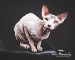 Cat client testimonial
