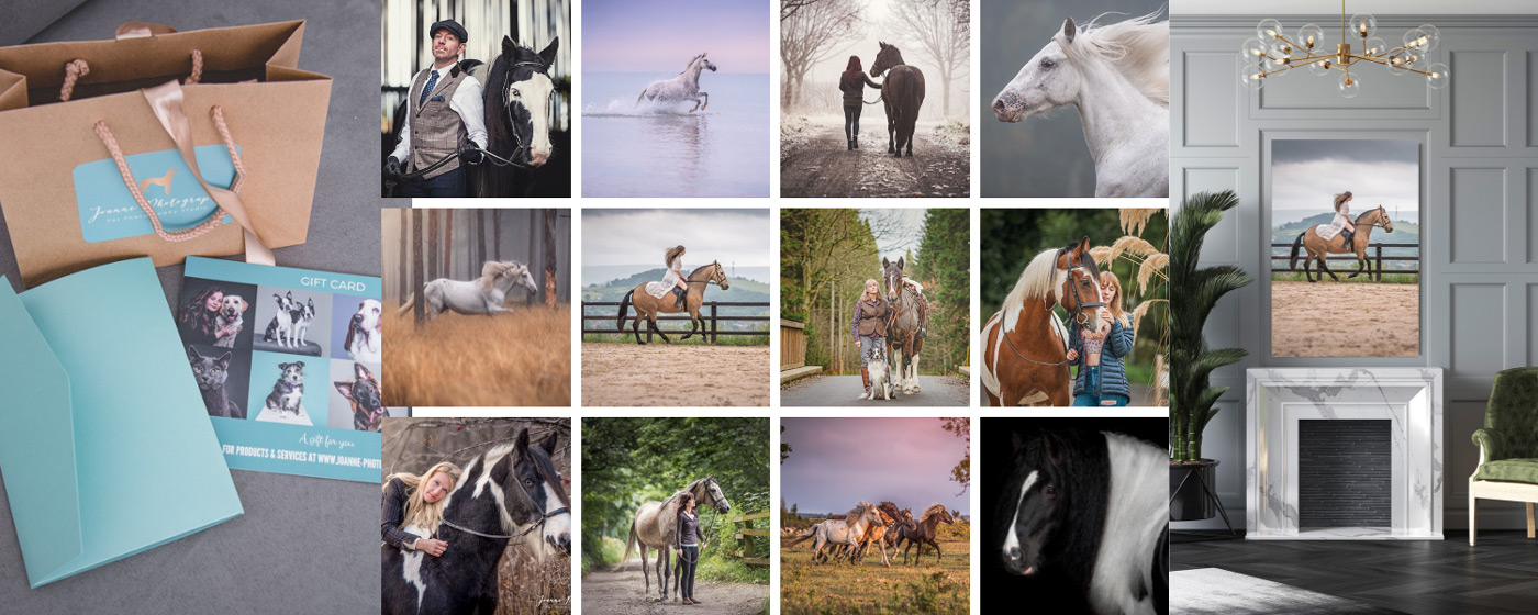 Horse-Photographer-Cheshire
