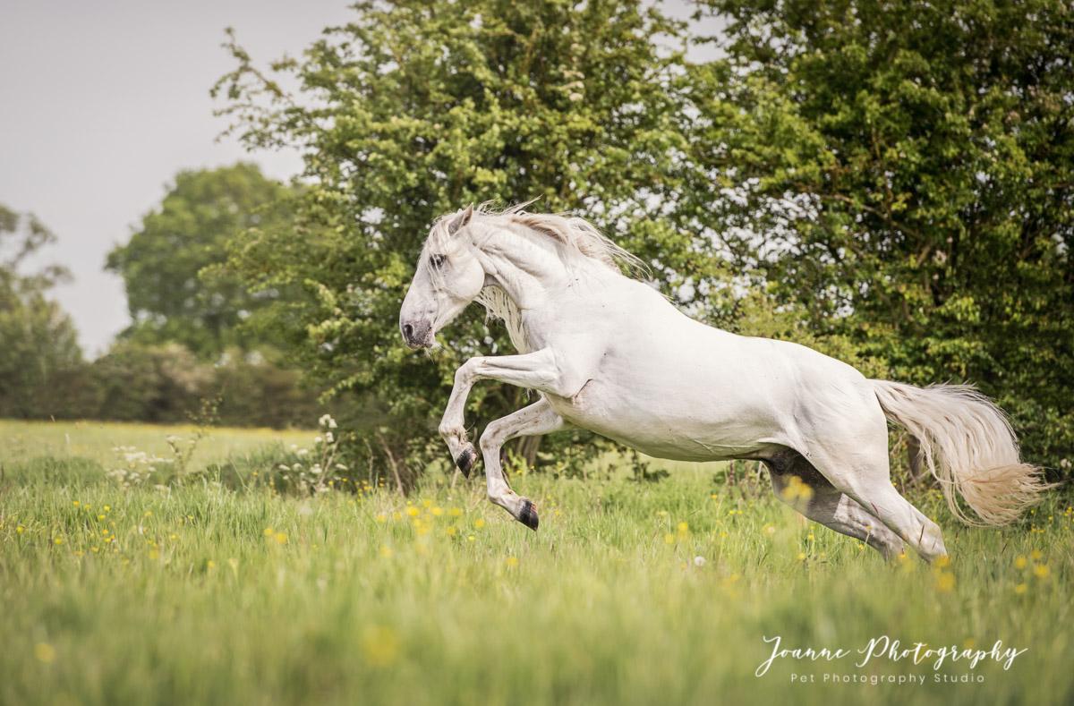 Beautiful horse running free. @ben_actionhorses