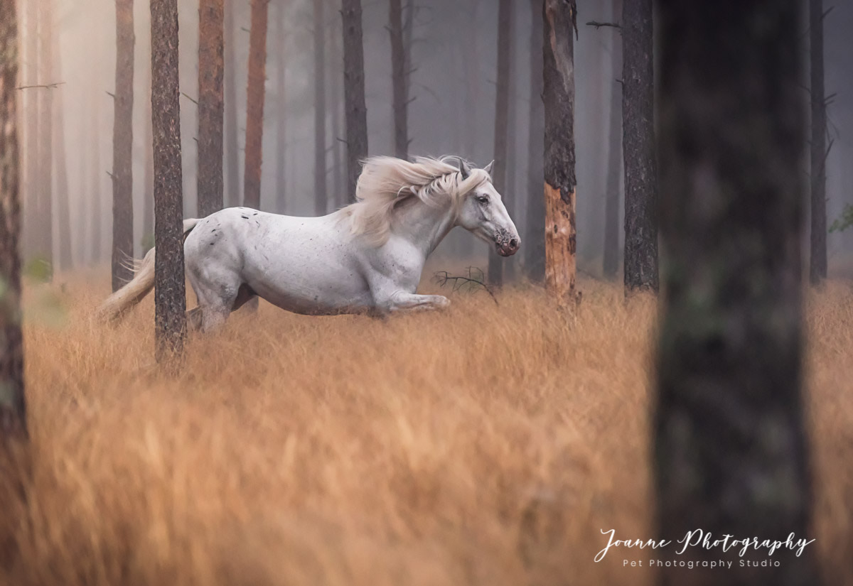 Magical Forest and white horse Portrait - Cheshire